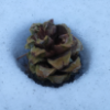 An Inspirational Pinecone's Photo